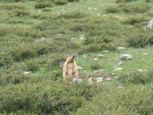 Непал-Тибет 2007г. 422
