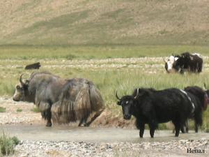 Непал-Тибет 2007г. 723